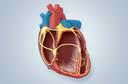 Saiba mais sobre as cardiopatias congênitas